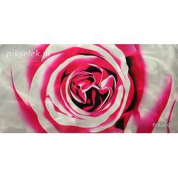 Nieśmiała róża