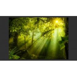 Fototapeta  W tajemniczym lesie