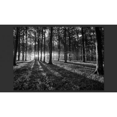Fototapeta  The Light in the Forest