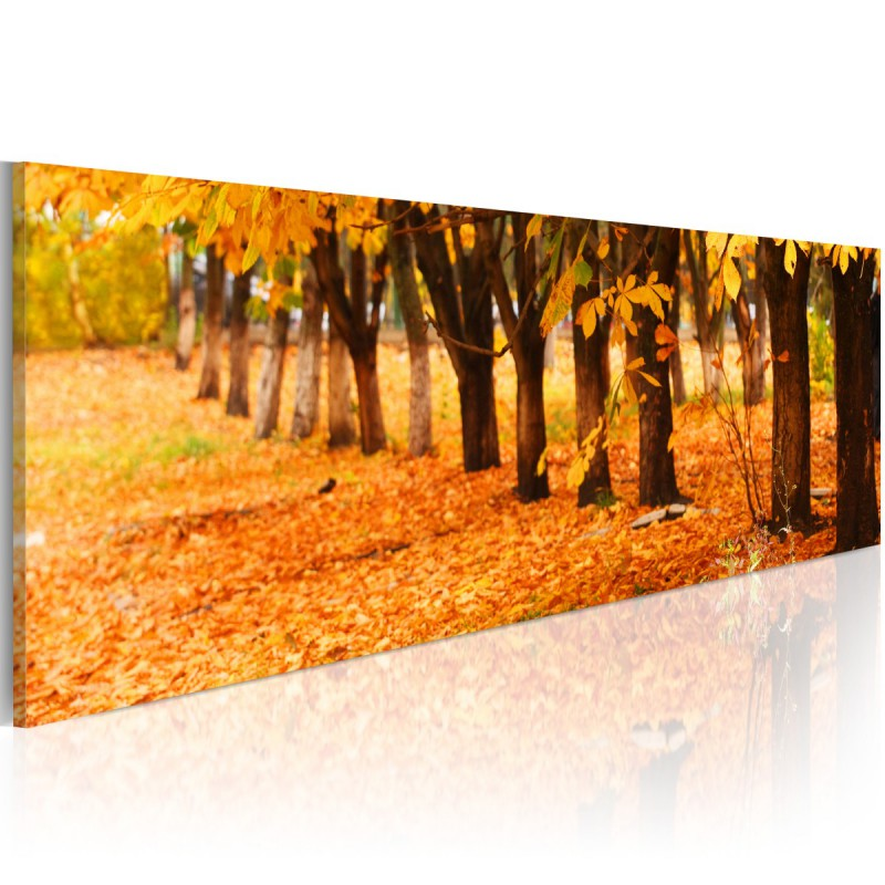Obraz Park covered with golden leaves