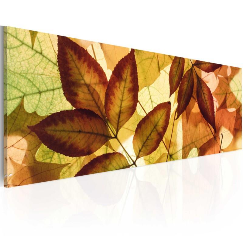 Obraz  kolaż  liście