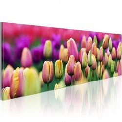 Obraz Tęczowe tulipany