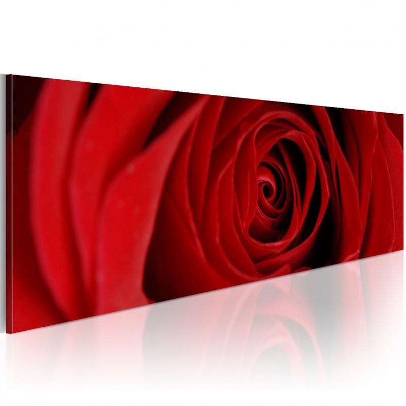 Obraz  Róża północy