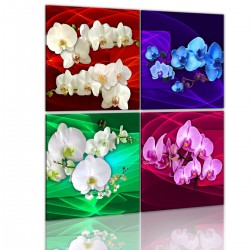 Obraz Kolorowe orchidee I