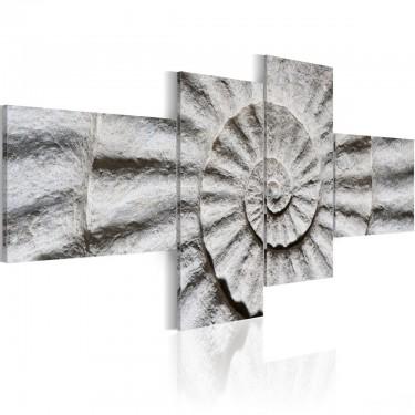Obraz  Kamienna muszla
