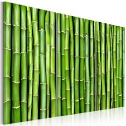 Obraz Ściana z bambusa