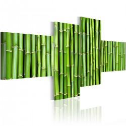 Obraz Zielone łodygi bambusa
