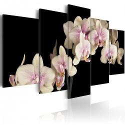 Obraz  Orchidea na kontrastującym tle