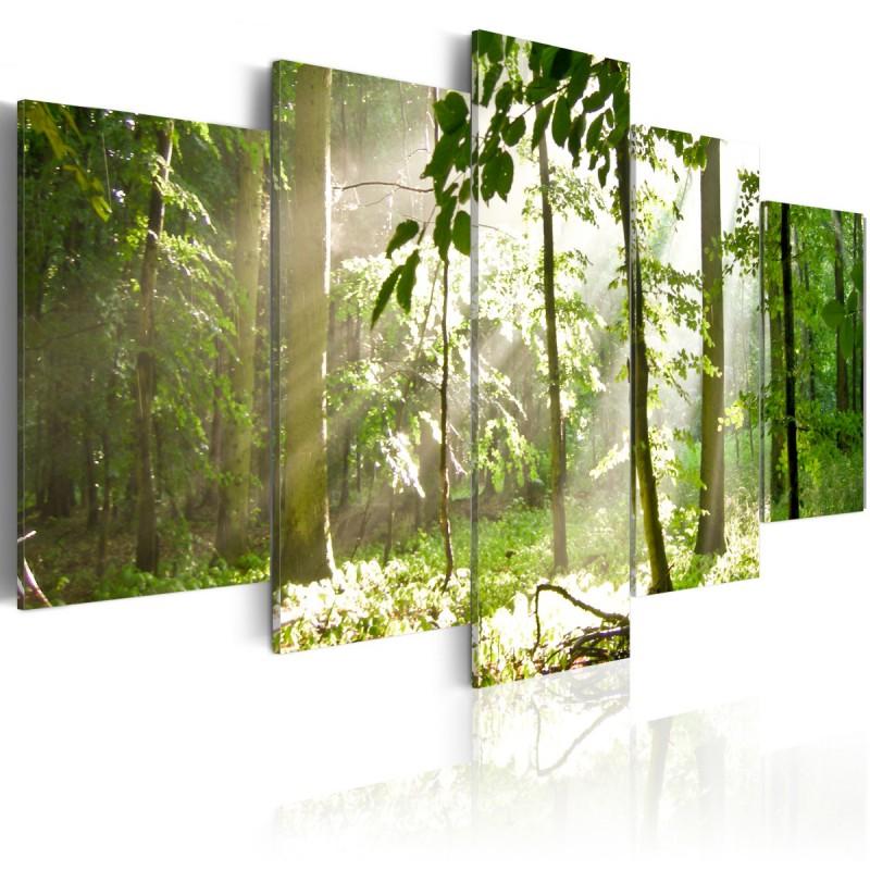Obraz Promień światła pośród drzew