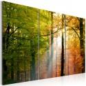 Obraz Spokojny jesienny las