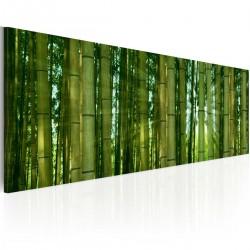 Obraz Bambusy w blasku słońca