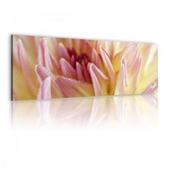 Obraz Słodkie kwiaty