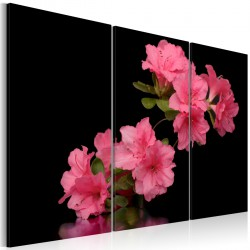 Obraz Różowy kwiat wiśni