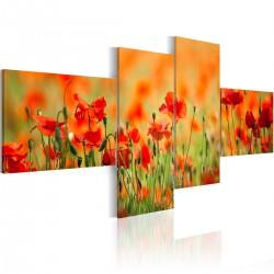 Obraz - Radosna makowa łąka