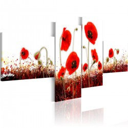 Obraz - Pole czerwonych maków na białym tle