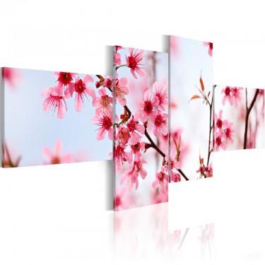 Obraz  Piękno kwiatów wiśni