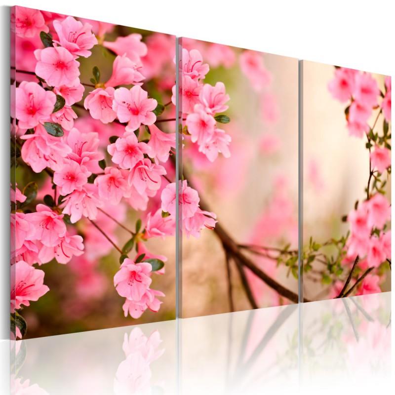 Obraz  Kwiat wiśni