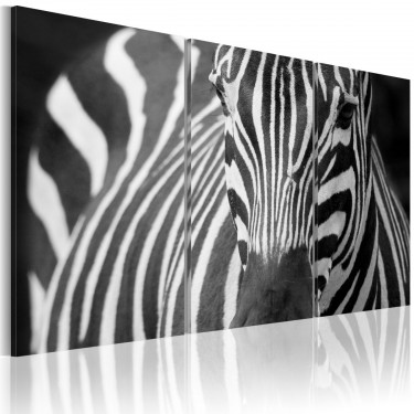 Obraz  Pani Zebra