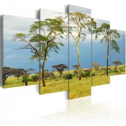 Obraz - Roślinność Afryki