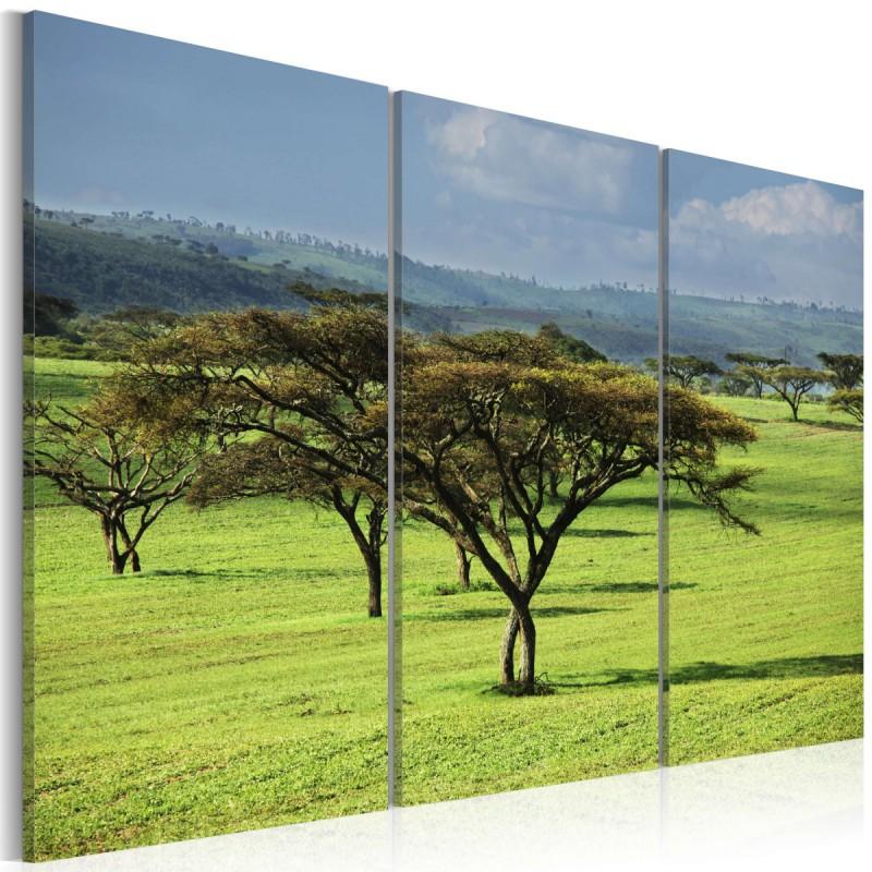 Obraz  Afrykańskie akacje
