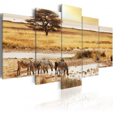 Obraz  Zebry na sawannie