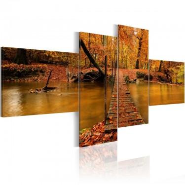 Obraz  Kładka przez leśny strumyk