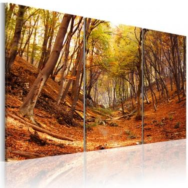 Obraz - Jesienny wąwóz