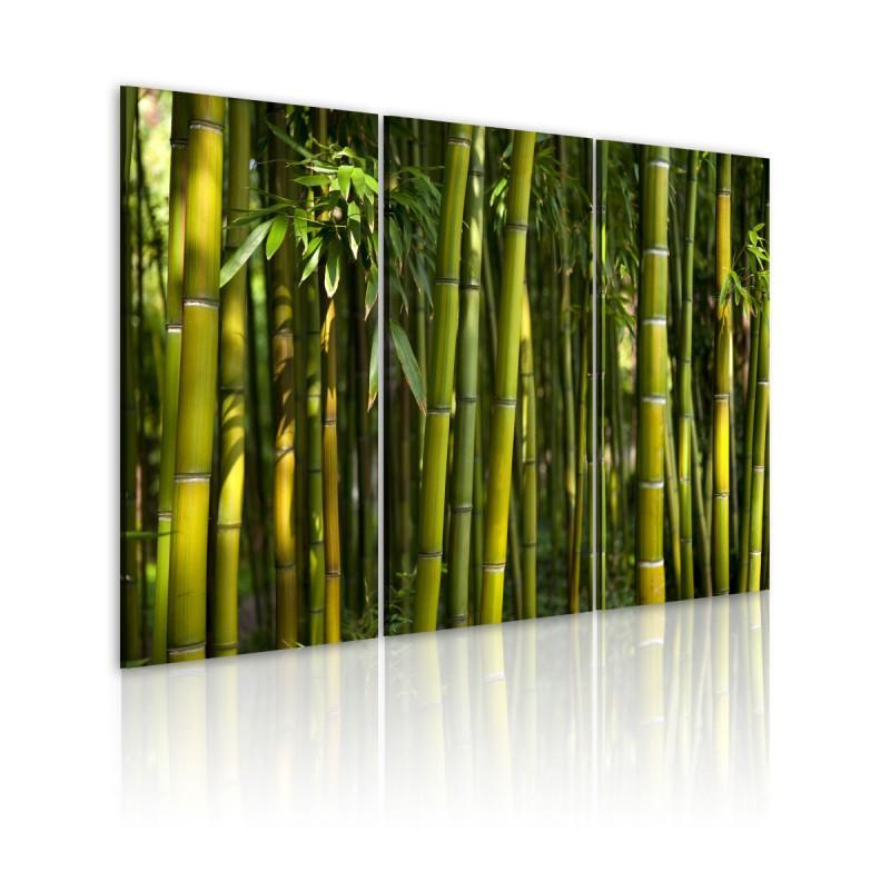 Obraz  Bambus i zieleń