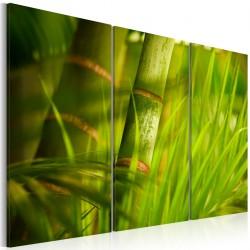 Obraz Soczysta zieleń tropikalnych traw