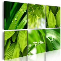 Obraz  Soczysta zieleń liści