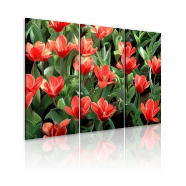 Obraz  Czerwone tulipany w rozkwicie