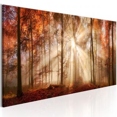 Obraz  Jesienny świt