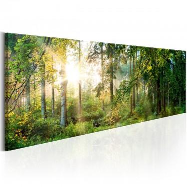 Obraz  Leśne schronienie
