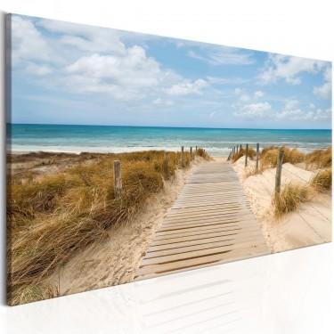 Obraz  Wietrzna plaża