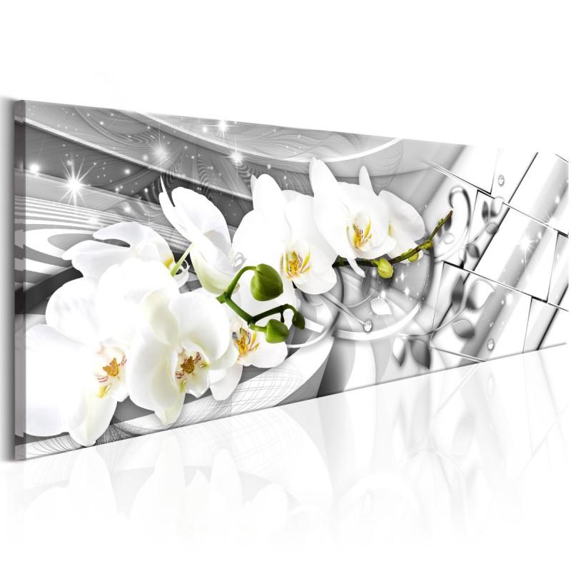 Obraz  Zakręcone orchidee