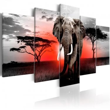 Obraz  Samotny słoń