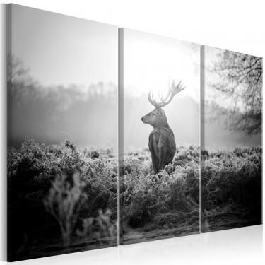 Obraz  Czarnobiały jeleń I