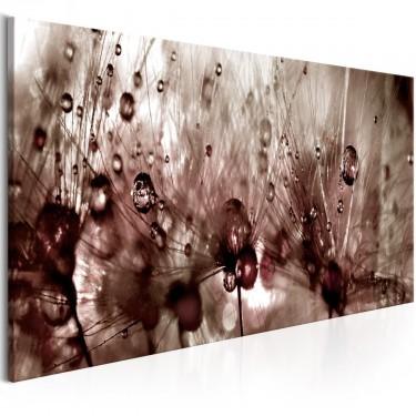 Obraz  Dmuchawce po deszczu