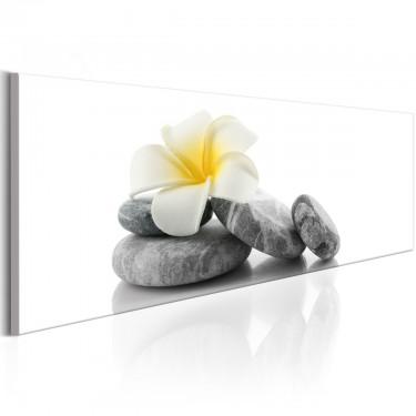 Obraz  Biały Lotos