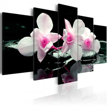 Obraz  Odpoczynek orchidei