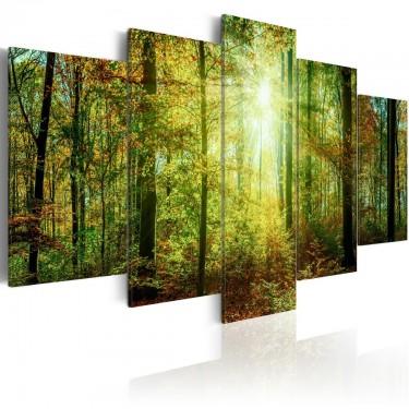 Obraz  Leśna knieja