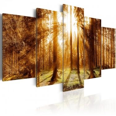 Obraz  Leśna iluminacja