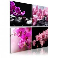 Obraz Orchidee piękniejsze niż kiedykolwiek