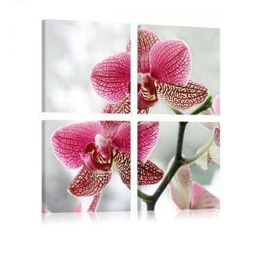 Obraz - Fantazyjna orchidea