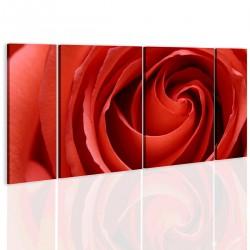 Obraz Passionate rose