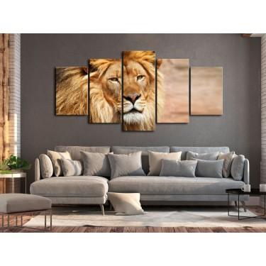 Obraz  Król zwierząt (5częściowy) szeroki pomarańczowy
