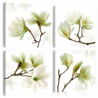 Obraz  Podziw magnolii
