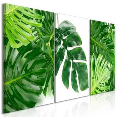Obraz  Liście palmy (3częściowy)