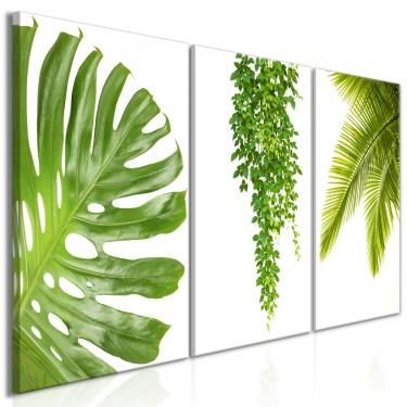 Obraz  Piękne palmy (3częściowy)