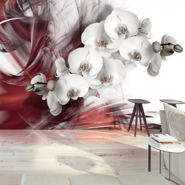 Fototapeta  Orchidea w czerwieni
